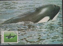 O) 1983 PORTUGAL. WHALE-ORCINUS-ORCA KILLER WHALE-CETACEO, MAXIMUM CARD, XF - Maximum Cards & Covers