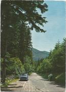 V682 Reggello (Firenze) - Saltino - Viale Vallombrosa - Auto Cars Voitures / Viaggiata 1983 - Italia