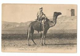 Chambba Monté Sur Un Mehari - Ansichtskarten