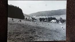 CPSM ENVIRON DE MORTEAU DOUBS PATURAGES 1956  TACHEE