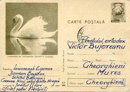 20812 Romania,stationery Card Circuled 40b. Showing A Swan, Schwan,cygne
