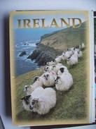 Ierland Ireland With Sheep - Ierland