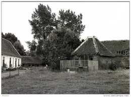 OLSENE - Zulte (O.Vl.) - Molen/moulin - Historische Prentkaart (1992) Van De Rosmolen Met Het Verdwenen Neerhof - Zulte