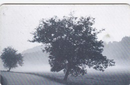 Czech Rep. C293, Butterfly, Moringl - Tree, 2 Scans.