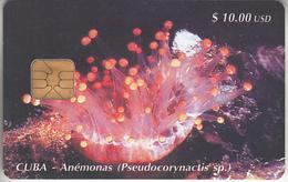 CUBA - PHONE CARD - CHIP   ***   ANÉMONAS  ***