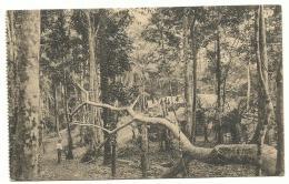 Congo Belge - Carte Vue Mayumbe - Village En Pleine Forêt - Expédié Kongolo 1938