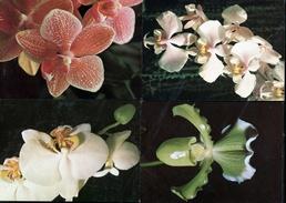 401-CZECHOSLOVAKIA Set Of 12 Pieces Of Postcards-orchids Flora Olomouc Pressfoto Bratislava 18,500 Pcs Of Sets Ca 1985 - Blumen