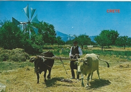 Crete - Greece.  The Life In The Country.   # 05743 - Unclassified