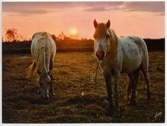 Coucher De Soleil En Camargue - Cheval Chevaux Horse Animal - France (238) - Controluce