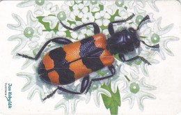 Czech Rep. C312, Beetle Trichodes Apiarius, 2 Scans.   GEM1B (Not Symmetric White/Gold)