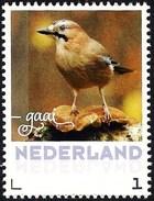 Netherlands Nederland 2017 - Bird - Eurasian Jay - Vögel