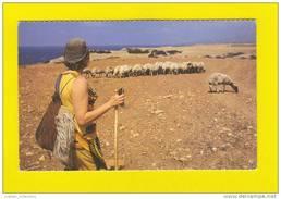 1970 YEARS CYPRUS CHYPRE BERGER &  TROUPEAU DE CHÈVRE CHEVRES SHERPHERD & FLOCK OF GOATS GOAT POSTCARD - Chypre