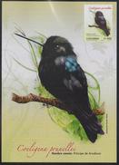 "C064.-. 2010 - HUMMINGBIRDS / COLIBRI - MAXICARD - COELIGENA PRUNELLEI - "" PRINCIPE DE ARCABUCO """