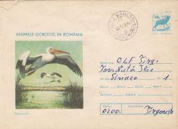 59058- PELICANS, BIRDS, COVER STATIONERY, 1977, ROMANIA