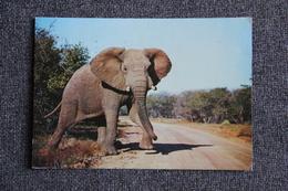 ELEPHANT - Elephants