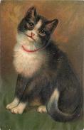 PORTRAIT DE CHAT - Carte Gaufrée. - Chats