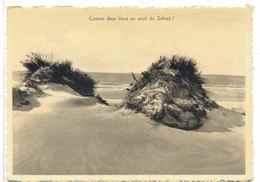 CPSM St Idesbald Comme Deux Lions Au Seuil Du Sahara - Koksijde