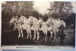 BABY PHOSPHATE VETERINAIRE - INDISPENSABLE AUX JEUNES ANIMAUX - Breeding