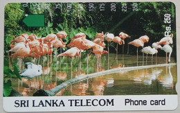 Sri Lanka Phonecard Rs 250 Units Flamingos Tamura Used