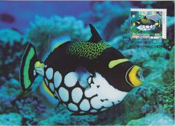 Australia Maximum Card Mi 3393 -  Reef Islands Fish - Clown Triggerfish (Balistoides Conspicillum) - 2010 - Maximum Cards