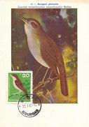 D29642 CARTE MAXIMUM CARD 1966 BULGARIA - ROSSIGNOL LUSCINIA CP MUSEUM ORIGINAL - Zangvogels