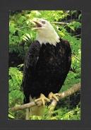 ANIMALS - ANIMAUX - PYGARGUE À TÊTE BLANCHE - AIGLE - HALIAEETUS LEUCOCEPHALUS - ZOO SAUVAGE DE ST FÉLICIEN - Oiseaux
