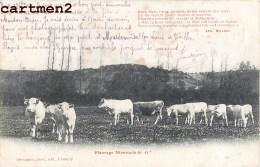 UN PATURAGE NIVERNAIS TROUPEAU DE VACHES FERME MORVAND 58 NIEVRE - Frankreich