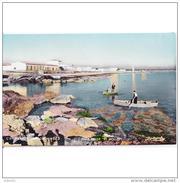 BLARSTP3268CPA-LFTMD9106TPPES.Tarjeta Postal De BALEARES.Casas,mar,rocas,barcas De Pesca En CAN PICAFORT  En MALLORCA - Pesca