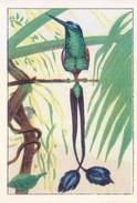 SWITZERLAND - NESTLE 'S PICTURE STAMP / CARD / LABEL - HONEY EATING BIRD - Advertising