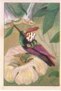 SWITZERLAND - NESTLE 'S PICTURE STAMP / CARD / LABEL - HONEY EATING BIRDS - Advertising