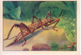 SWITZERLAND - NESTLE 'S PICTURE STAMP / CARD / LABEL - CURIOUS INSECTS - Advertising