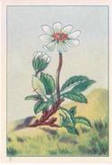 SWITZERLAND - NESTLE 'S PICTURE STAMP / CARD / LABEL - ALPINE PLANTS - Advertising