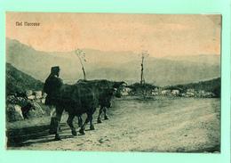 AP131  NUORO - DINTORNI - PASTORE TRASPORTO BESTIAME FP NV EPOCA 1920 - Nuoro