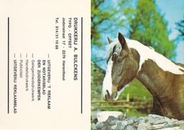 Kalender 1976 Drukkerij A. Bulckens Herenthout ( Paard Cheval ) - Herenthout