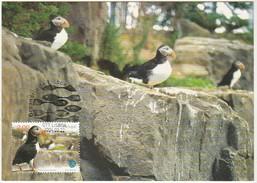 Maximum Card * Portugal * 2004 * Oceanario De Lisboa * Papagaio-do-mar - Maximum Cards & Covers