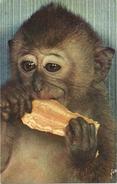 "CPA ANIMAL SINGE Mangeant (gros Plan) ""Singes Et Singeries"" - Monos"