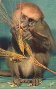 """CPA ANIMAL SINGE Mangeant Des Graines (gros Plan) """"Singes Et Singeries"""" - Monos"""