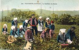 CPA PLOUGASTEL-DAOULAS - LA CUEILLETTE DES FRAISES - Plougastel-Daoulas