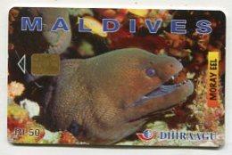 TK14311 MALDIVES - Chip 256 MLDG... Moray Eel - Maldives