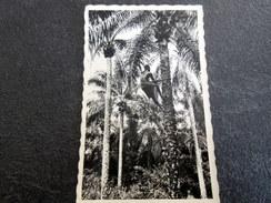 CPSM Animée - DAHOMEY - Récolte Des Palmistes - Dahomey