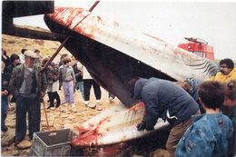 LA TRANCHE SUR MER - 27 Novembre 1922 - Baleine échouée A La Pointe Du Grouin - Tirage Numéroté Et Limité (96379) - La Tranche Sur Mer