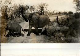 PHOTO - Photo De Presse - Animaux - éléphants - - Afrique