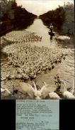 PHOTO - Photo De Presse - Gardeuse D'Oies En CHINE - 1974 - Photos