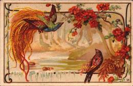 1 Chromo - Chicorée A La Belle Jardiniere - BERIOT LILLE - Oiseau De Paradis  - Bill-583 - R/V - Thé & Café