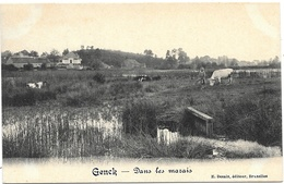 Genck NA5: Dans Les Marais - Genk