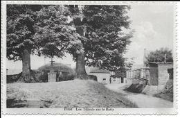 { DG - 283 - } Filot - Le Tilleul Sur Le Batty - Hamoir