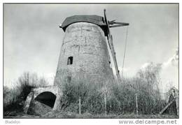 HEKELGEM Bij Affligem (Vlaams-Brabant) - Molen/moulin - De Oude Molen Zonder Wieken, Voor Zijn Restauratie. - Affligem