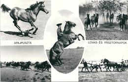 2920 Hungary Postcard Fauna Animal Mammal Domestic Horse Folklore Postal Used - Horses