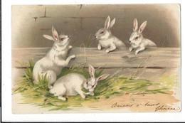 16601 - Quatre Lapins Blancs Rencontre - Pâques