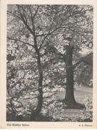 Ak108799 - Germania